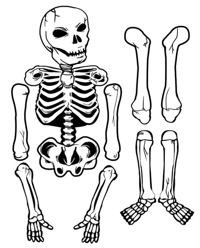 рисунок для костюма скелета